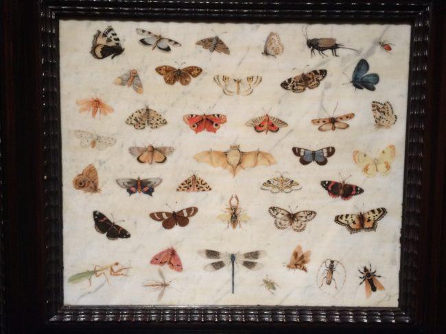 ヤン・ファン・ケッセル1世による《蝶、コウモリ、カマキリの習作》
