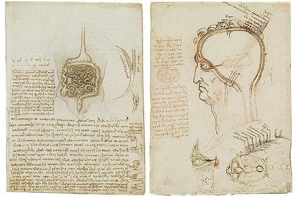 レオナルド・ダ・ヴィンチ 『「解剖手稿」より頭部断面,脳と眼の結びつき部分』『「解剖手稿」より消化管と腎臓、そして尿管部分』