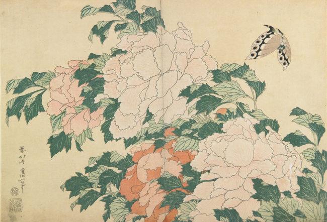 葛飾北斎《牡丹に蝶》