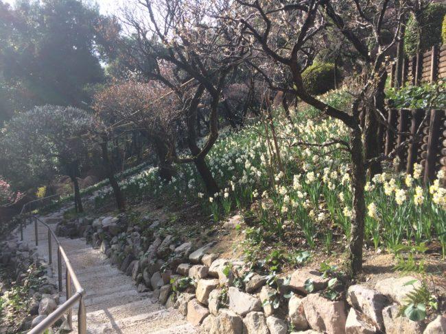 静嘉堂文庫美術館庭園の様子